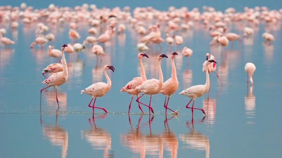 flamingo-group