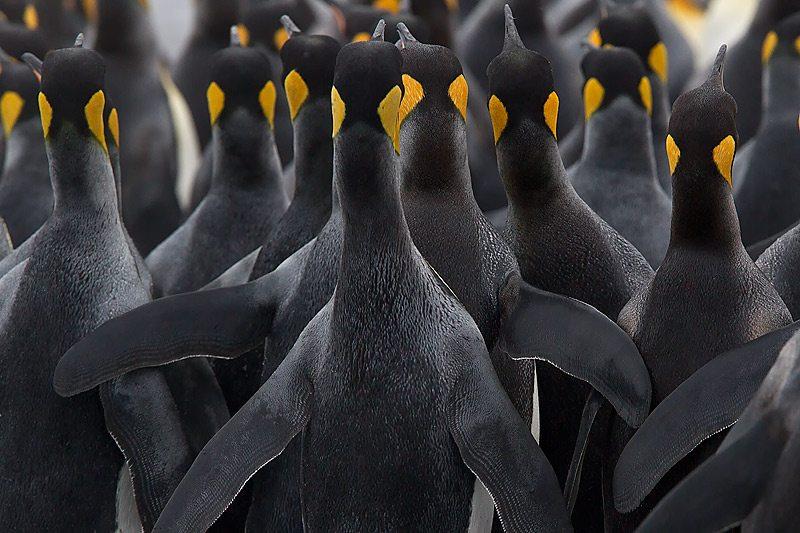 penguin-hug