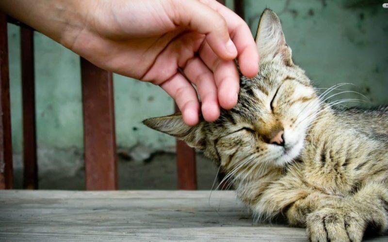 petting-cat