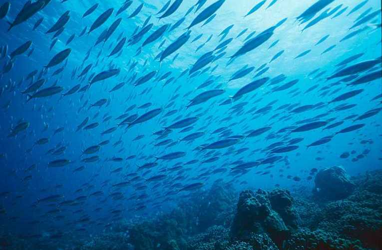 smaller-fish-more-vunerable-overfishing