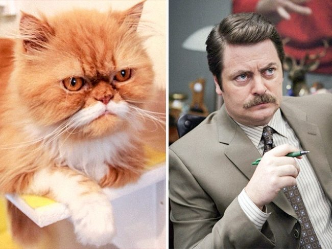 9-cats-that-look-just-like-movie-characters