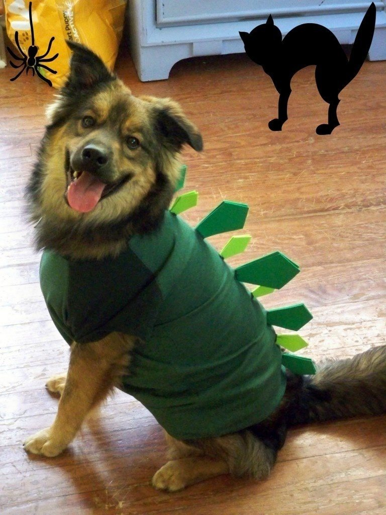 1-dog-halloween-costumes-that-are-just-adorable