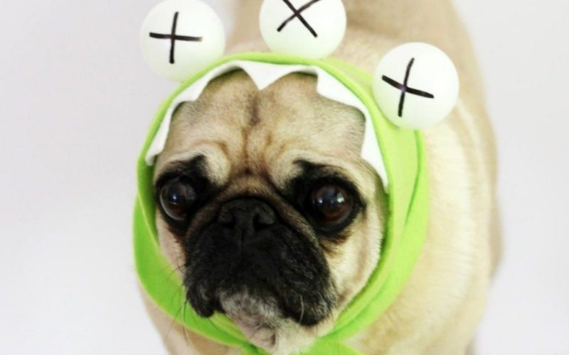 9-dog-halloween-costumes-that-are-just-adorable