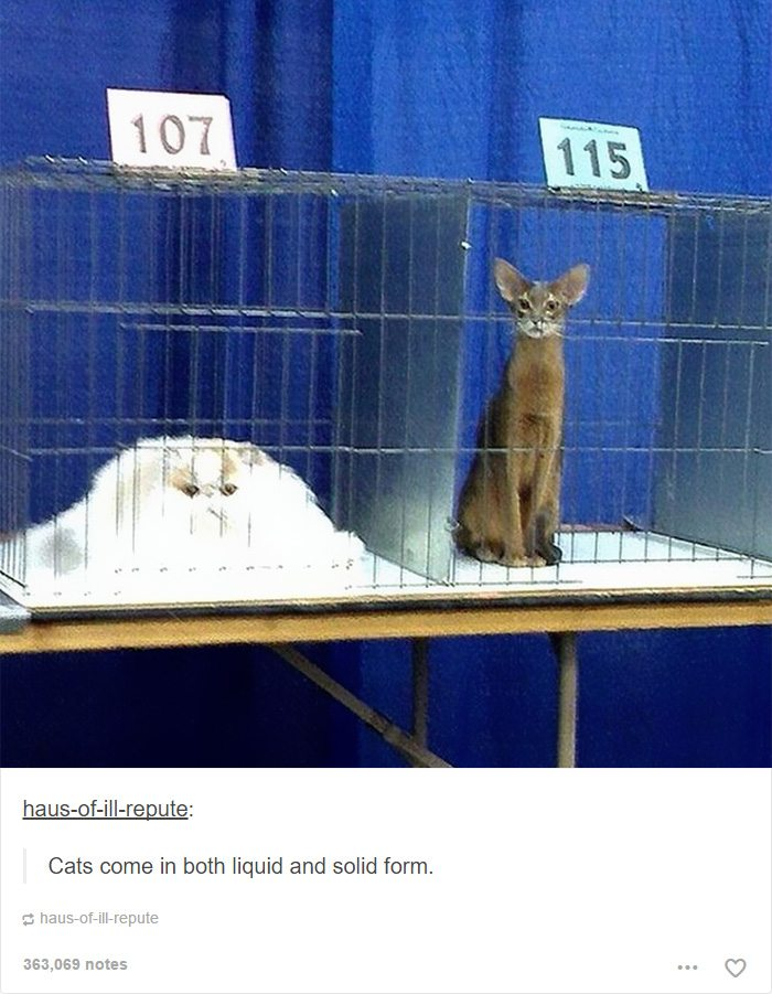 1-cat-tumblr-captions-that-are-simply-priceless