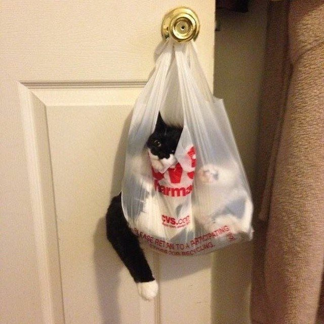 11-pics-proving-cats-can-get-stuck-in-anything