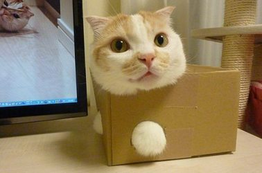 7-pics-proving-cats-can-get-stuck-in-anything