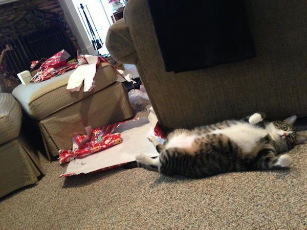 10-grumpy-pets-that-still-dont-have-the-christmas-spirit