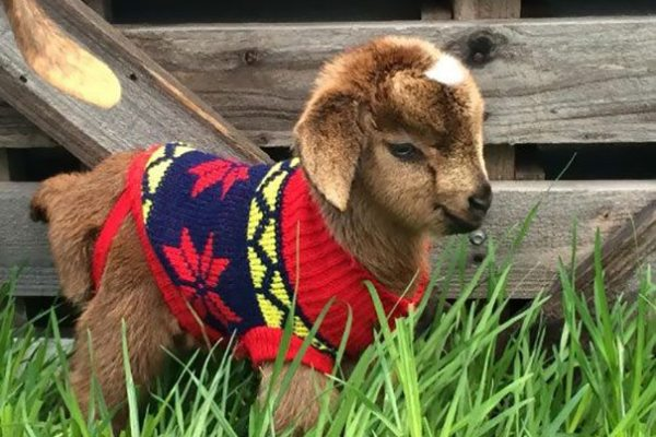 11-animals-in-sweaters-will-melt-your-heart-forever