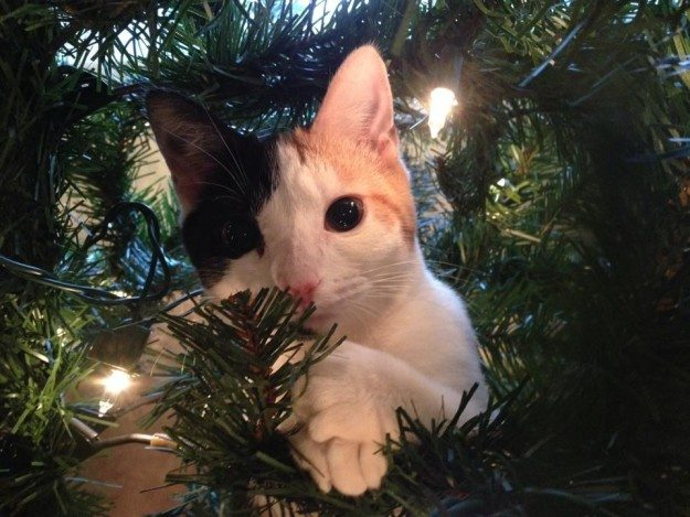 11-cats-that-love-christmas-trees-a-bit-too-much