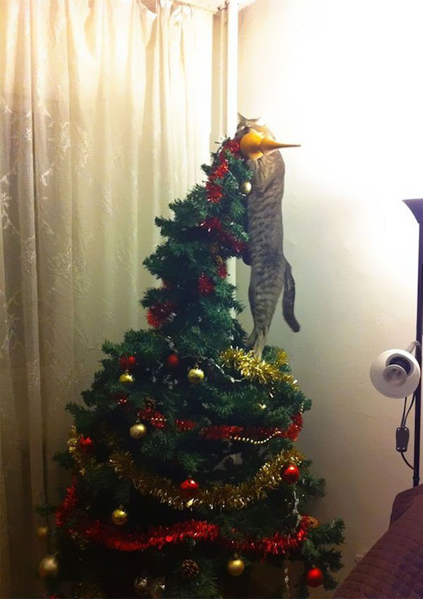 24-grumpy-pets-that-still-dont-have-the-christmas-spirit
