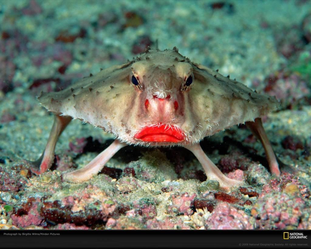 5-batfish-red-lips-ocean