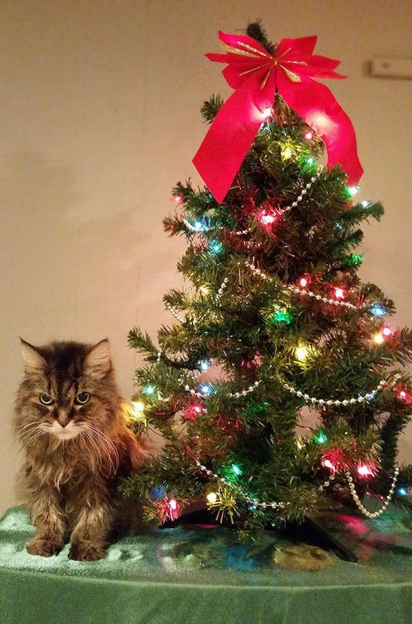 7-grumpy-pets-that-still-dont-have-the-christmas-spirit