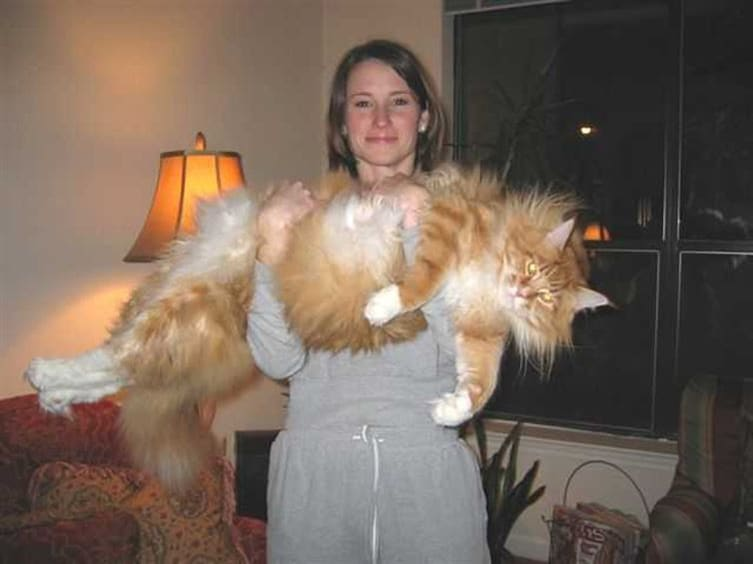 10-cats-so-large-they-seem-out-of-this-world