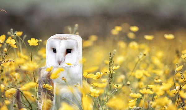 19-are-these-cube-animals-really-that-cute