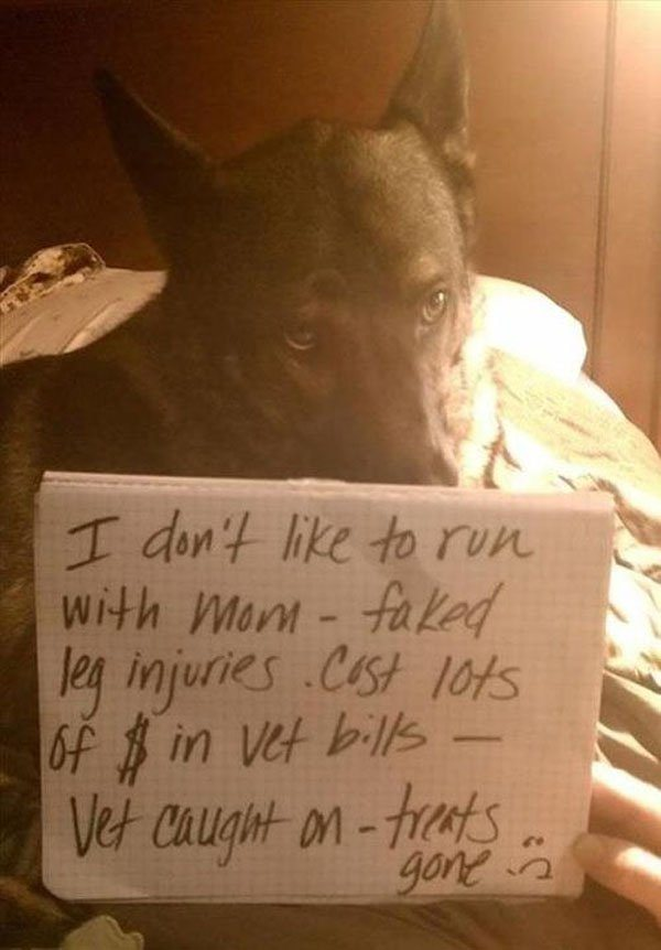 24-guilty-pets-ready-to-walk-on-hall-of-shame