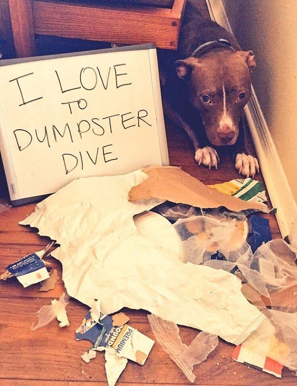 26-guilty-pets-ready-to-walk-on-hall-of-shame