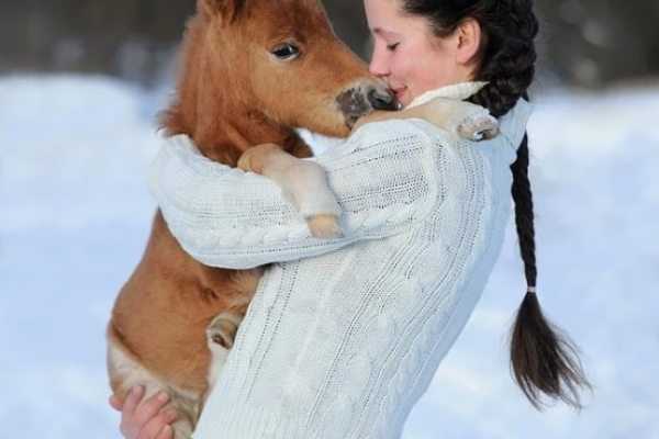 6-mini-horses-that-are-the-cutest-thing-in-this-universe