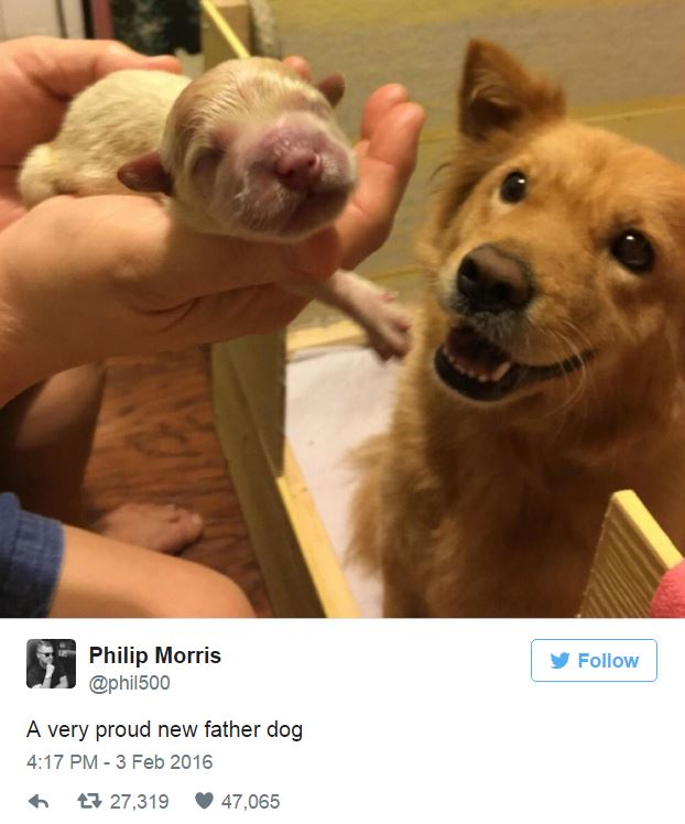 11-proud-new-father-dog