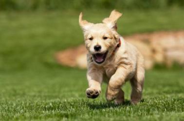 167303-425x282-dog-running