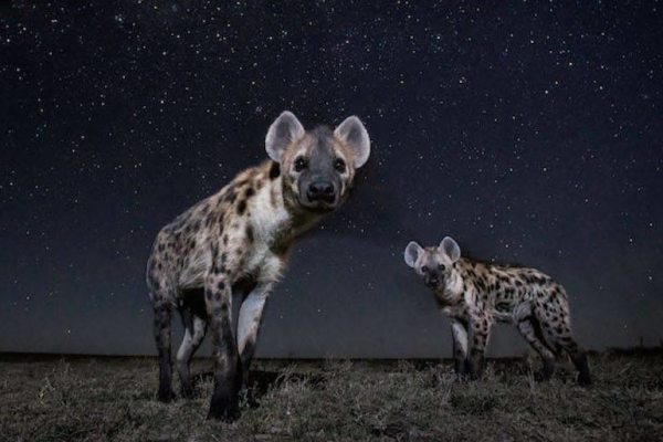 Superb-Pictures-of-African-Wild-Animals-at-NightSuperb-Pictures-of-African-Wild-Animals-at-Night5-900x629