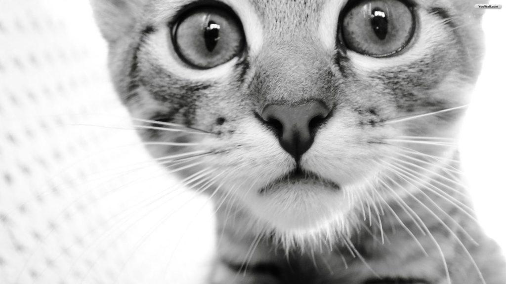 curious-cat-wallpaper