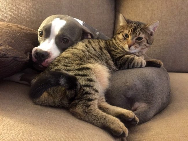 cats-and-dogs-3