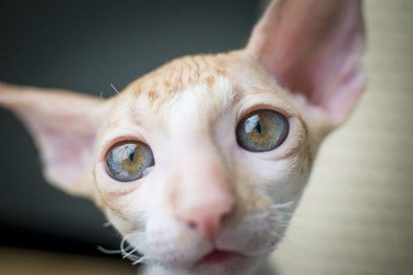 cute-cat-8