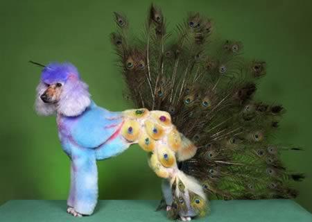 weird-animals-hairstyle-7