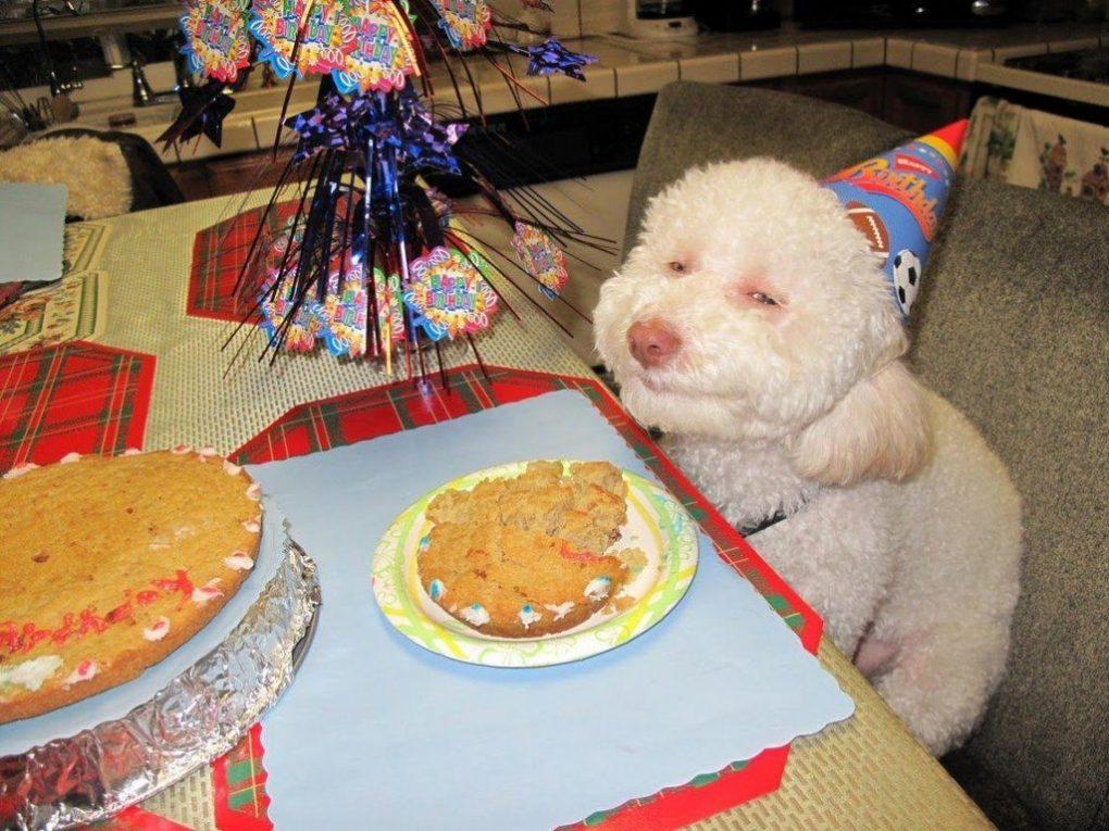 animal-birthday-1