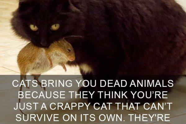 cat-facts-5