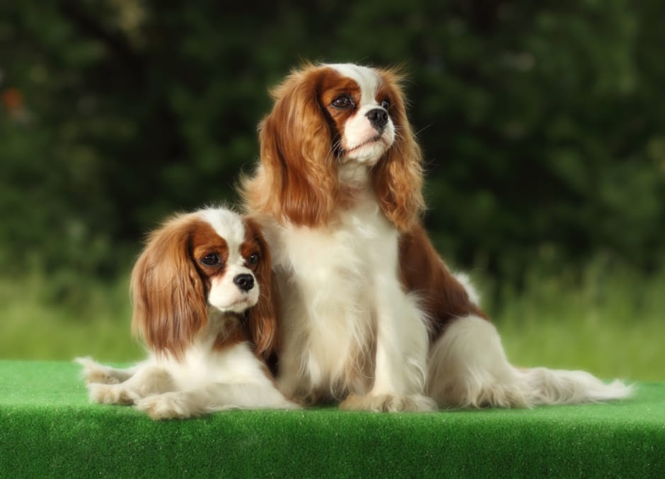 small-dogs-3