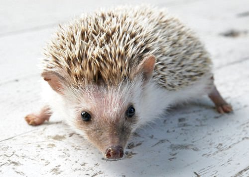 4-most-unusual-animals-to-keep-as-pets