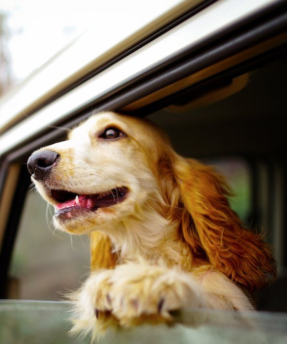 4-tips-for-traveling-with-pets