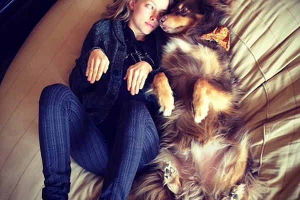 6-hollywood-dogs-incredibly-spoiled