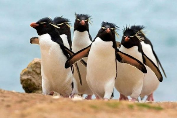9-animal-gangs-you-should-be-afraid-of