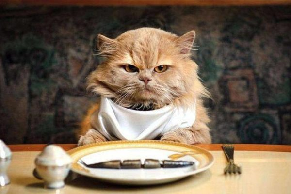 cat-eat-fish