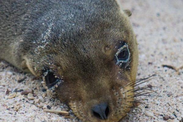 sea-lions-3
