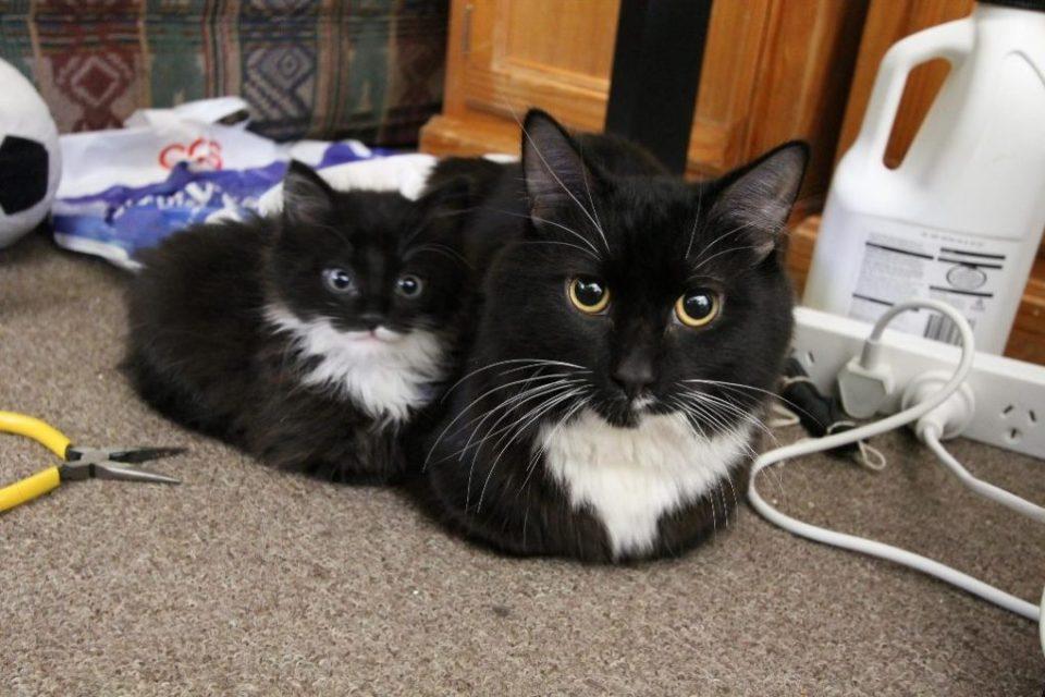 1-adorable-kittens-looking-just-like-their-siblings