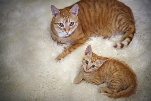 8-adorable-kittens-looking-just-like-their-siblings