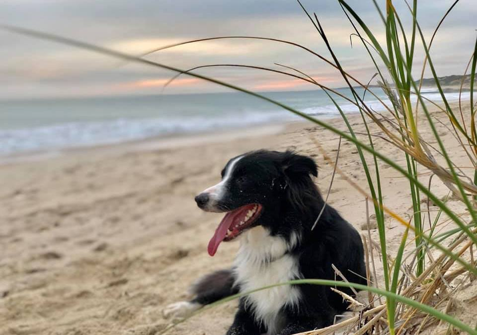 The Dog Who Taught Me the True Meaning of Overwhelm