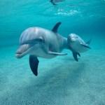 Los Delfines bajo el agua