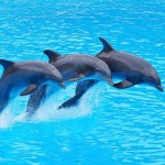 Los Delfines