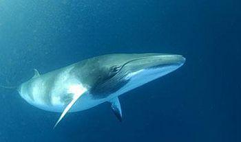 animales en peligro de extincion acuaticos