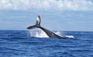 Habitat de las ballenas azules