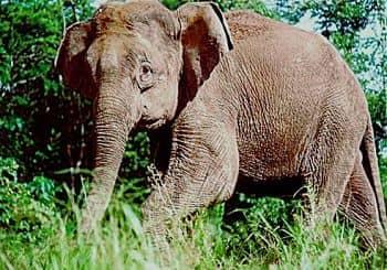 todos los animales en peligro de extincion