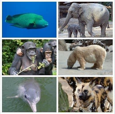 que especies estan en peligro de extincion