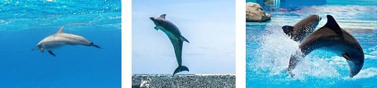 informacion de los delfines en el mar