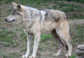 animales en peligro de extincion a nivel mundial