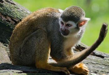 los animales que estan en peligro de extincion