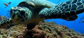 La Tortuga Verde de Mar